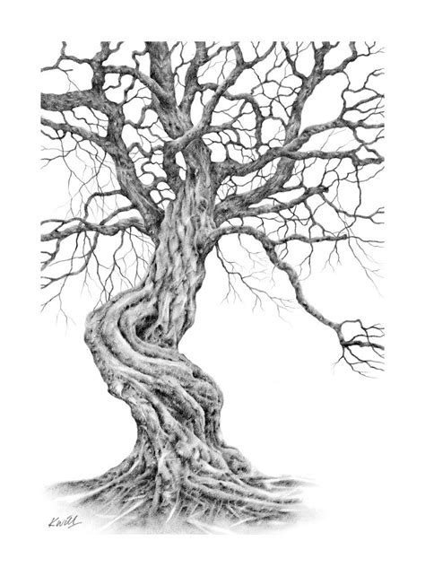 A Sketches Of Trees by Twisted Tree Pencil Drawing By Kevin Williamson Ideas