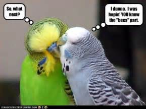 99 funny pictures cute and funny birds