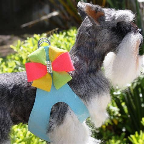 puppy pinwheel angela pinwheel step in harness by susan lanci