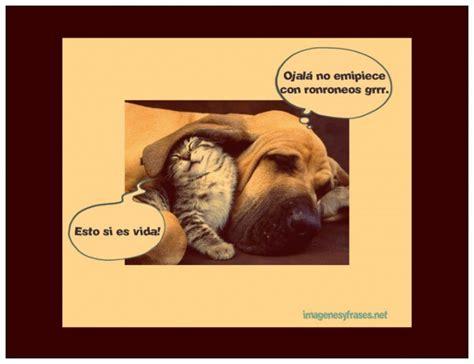 im 225 genes de perros y gatos graciosas para el whatsapp descargar imagenes graciosas para facebook gratis uas im
