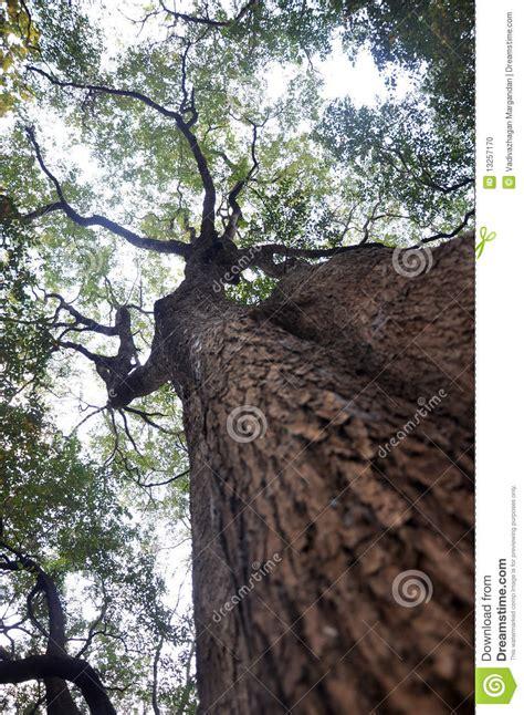 trees and sky royalty free stock photo cartoondealer com