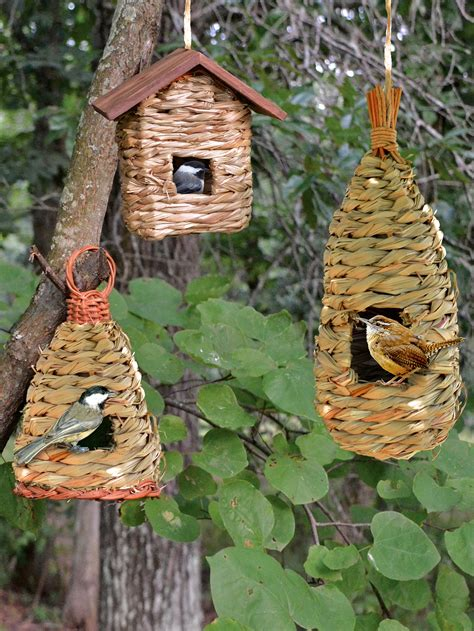 bird nest box placement bird free engine image for user