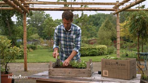 giardino aromatico come realizzare un giardino aromatico