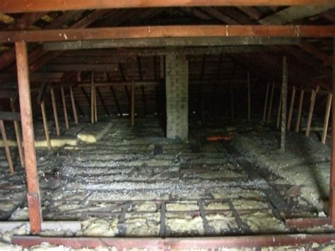 Black Mold In Attic - causes of toxic black mold in the attic attic guys