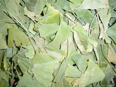 best ginkgo biloba brand ginkgo biloba leaves p e a best china manufacturer