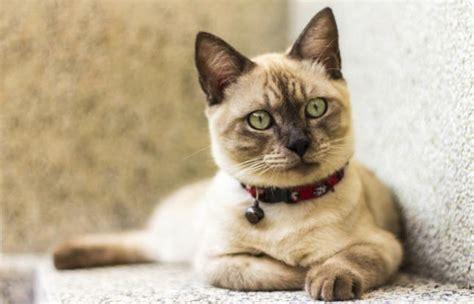 imagenes geniales de gatos 50 fondos de pantalla con mascotas para whatsapp del 29 de