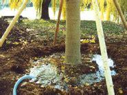 blumen bewässerung im urlaub gro 223 baumverpflanzung baumverpflanzung baumpflege europaweit