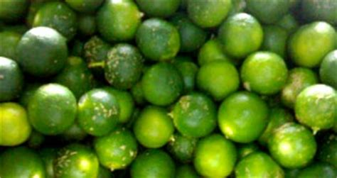a fruit is most commonly calamansi production franchise business and entrepreneur