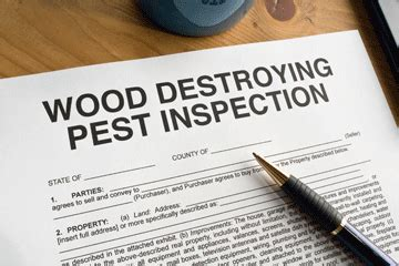 buying a house with termite damage buying a home with termite damage howstuffworks