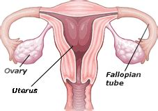 tying tubes during c section sterilisation information