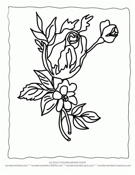 coloring pages of different types of flowers all kinds of coloring pages az coloring pages