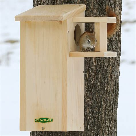 squirrel house duncraft com duncraft squirrel house with predator guard