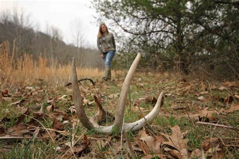 Best Places To Find Shed Antlers by And Talk Antler Dogs Deer Realtree