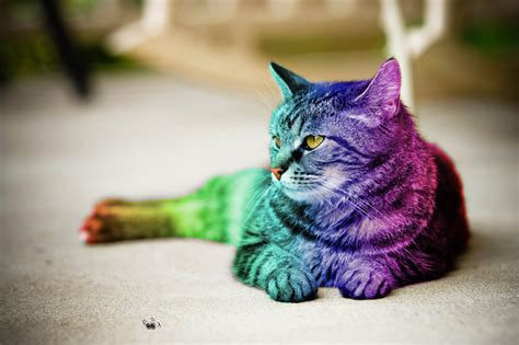More Than Words: Gay Pt. 2 ? Gay Cats   Autostraddle