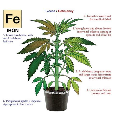 marijuana ls for sale zinc deficiency wikipedia autos post