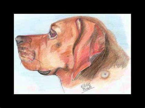 animales a lapiz youtube dibujos a lapiz perros y gatos ernesto wmv youtube