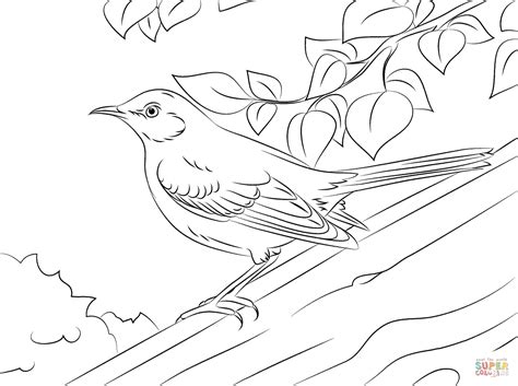 mockingbird coloring pages pics for gt mockingbird coloring page