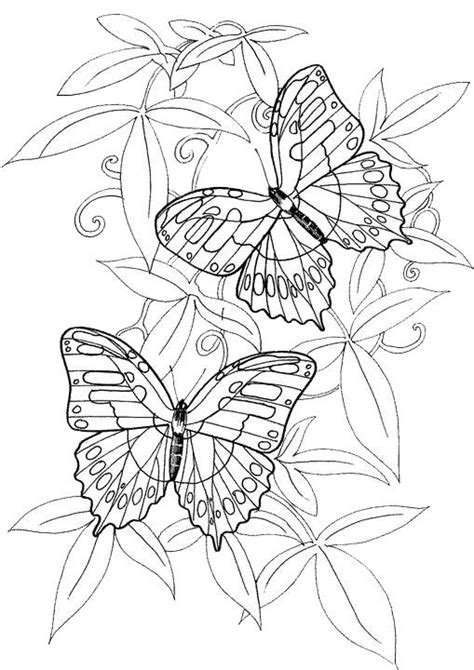 owl butterfly coloring page coloring pages of butterflies 2537 pics to color