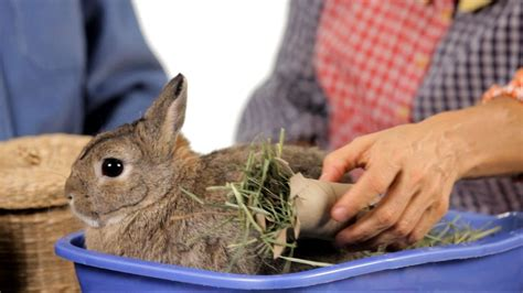 7 Tips On Caring For Baby Bunnies by What Kinds Of Toys Do Rabbits Like Pet Rabbits
