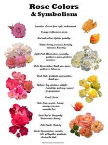 roses color meaning color meanings oh how i roses