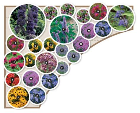 Butterfly Garden Design Gardens Pinterest Butterfly Garden Layout