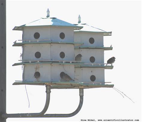 Sparrow Bird House Plans Sparrow Bird House