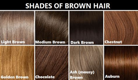 shades of hair color shades of brown hair color hair colors idea in 2018
