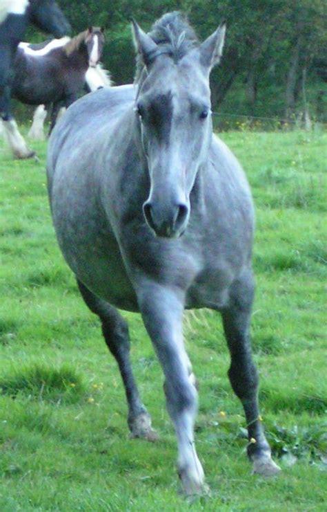 burro cojiendo pony caballo cojiendo mujer vp99 tamugaia mujer abotonada por