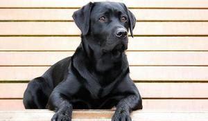 le berger near me liste de chien de sauvetage les plus utilis 233 s