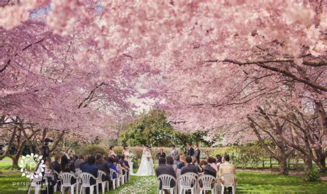 sarnia park cherry blossom wedding photos stan echo