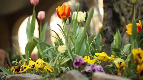 relaxing flower spring color flower  therapy