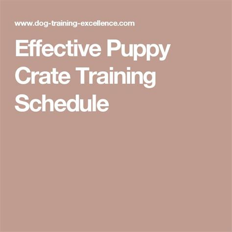 puppy schedule week by week 1000 ideas about puppy schedule on a puppy puppies and