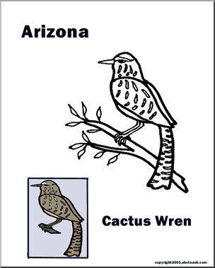 arizona state bird cactus wren abcteach