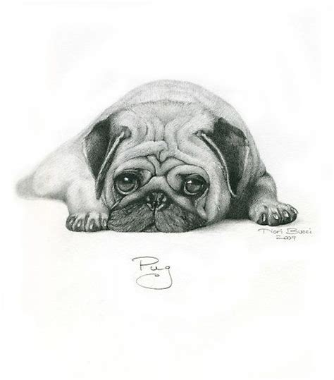pug sketches 711 best all things pug images on
