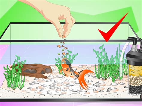 Set Golfish Kid how to set up a fish tank for goldfish 10 steps with pictures