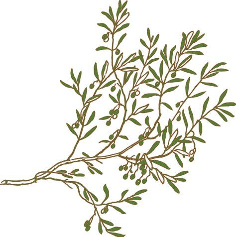 N Olive olive branch clip at clker vector clip