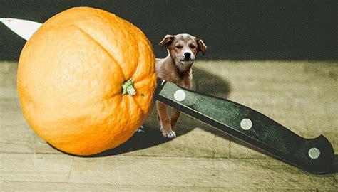 how much pumpkin for dogs festive treat pumpkin pie treats food recipes