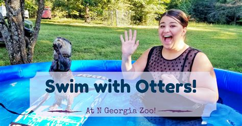 swim  otters  georgia wildlife encounter