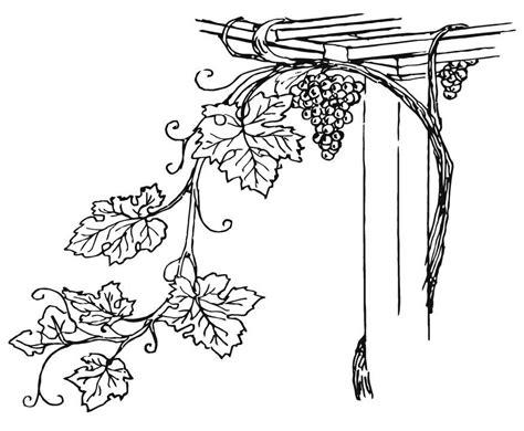 vine leaf coloring page disegno da colorare vigneto cat 15710