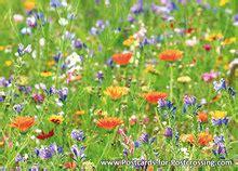 wilde bloemen in duitsland ansichtkaart wilde bloemen