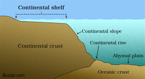 Continental Shelf Slope And Rise by Continental Shelf A Labeled Diagram And Some Interesting