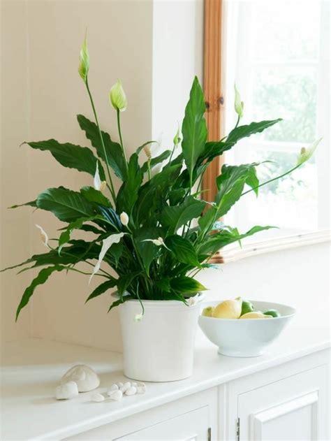 Topfrose Pflege Zimmer by Die Beliebtesten Zimmerpflanzen Deutschlands