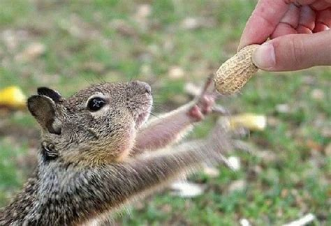 did you celebrate squirrel appreciation day with new