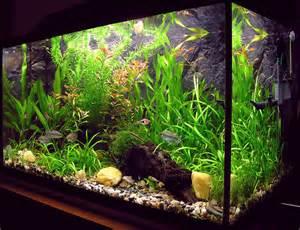 Aquarium Design Simple Aquarium Design Images Amp Pictures Becuo