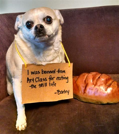 a of dogs 45 adorable guilty pics that will make your day