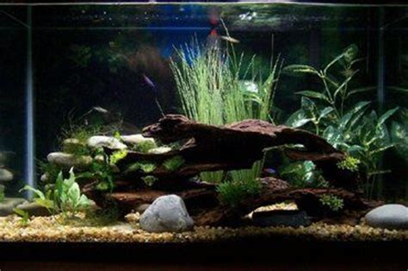 gallon java moss small java ferns  artificial plants