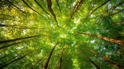 wallpaper trees   wallpaper  sunlight leaves