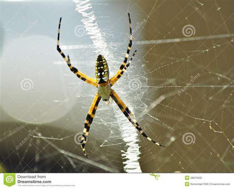 Garden Spider On Web Garden Spider On Web Stock Photo Image 28875600