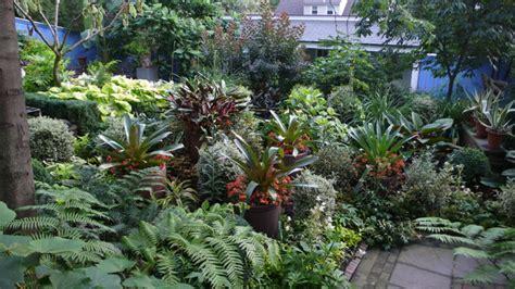 tropical landscape plants tropical landscape