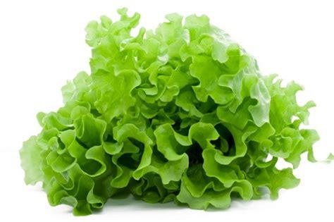 coltivare insalata in vaso coltivare l insalata in vaso pollicegreen